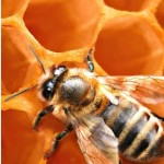 Call our bee control of Montclair experts today! 000-000-0000